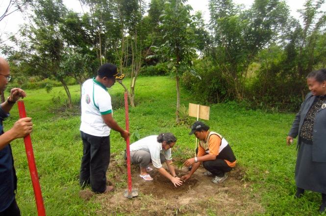 Planting an avocado tree