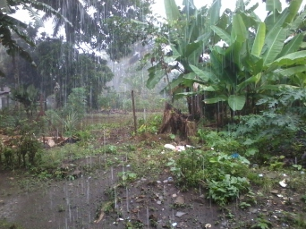 Downpour during the rainy season in Sumatra.