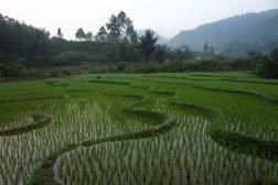 field, near Balige, Indonesia