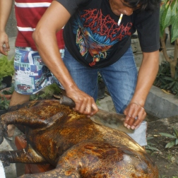 Scraping off the skin of pig, preparing to make saksang.