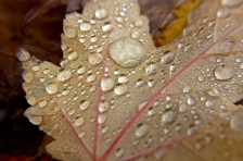 autumn rain, Seattle, WA