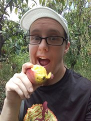 Fresh mango from the tree