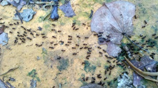 Ants in the forest