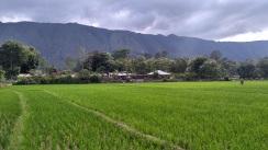 Scenery in Balige